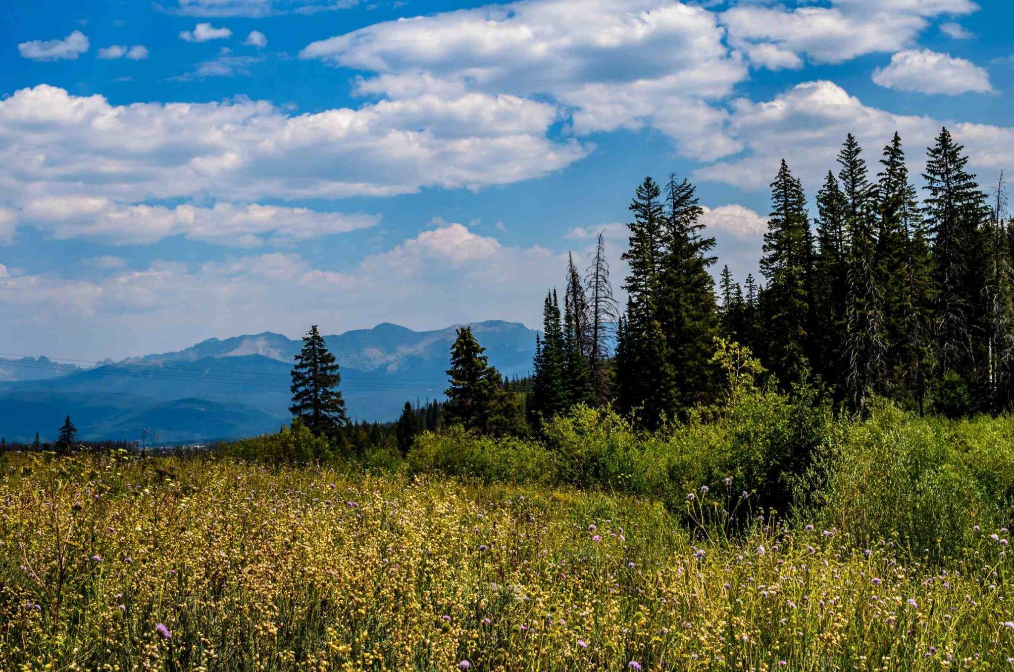 Colorado Nature Scene