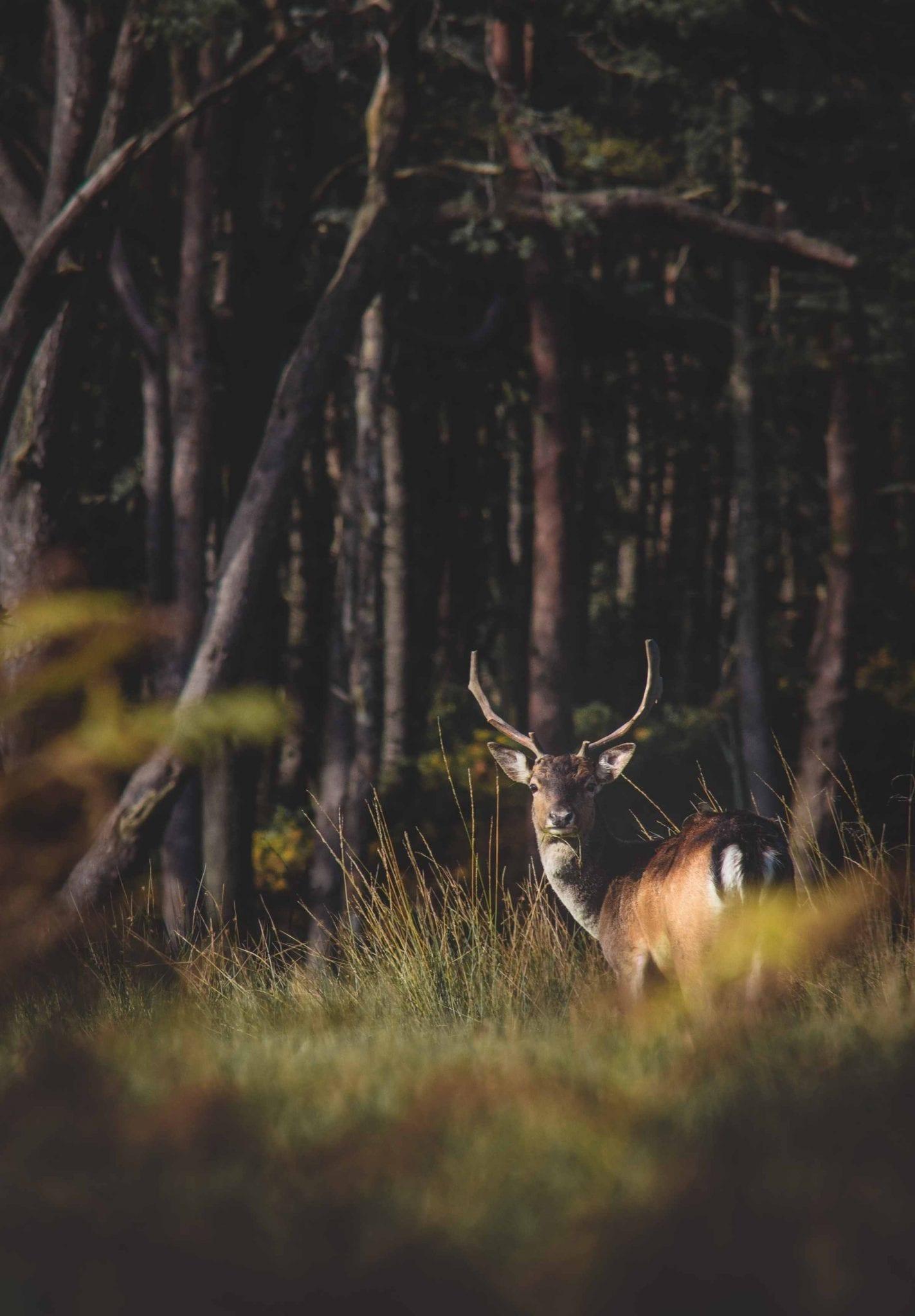 wildlife and wildlands
