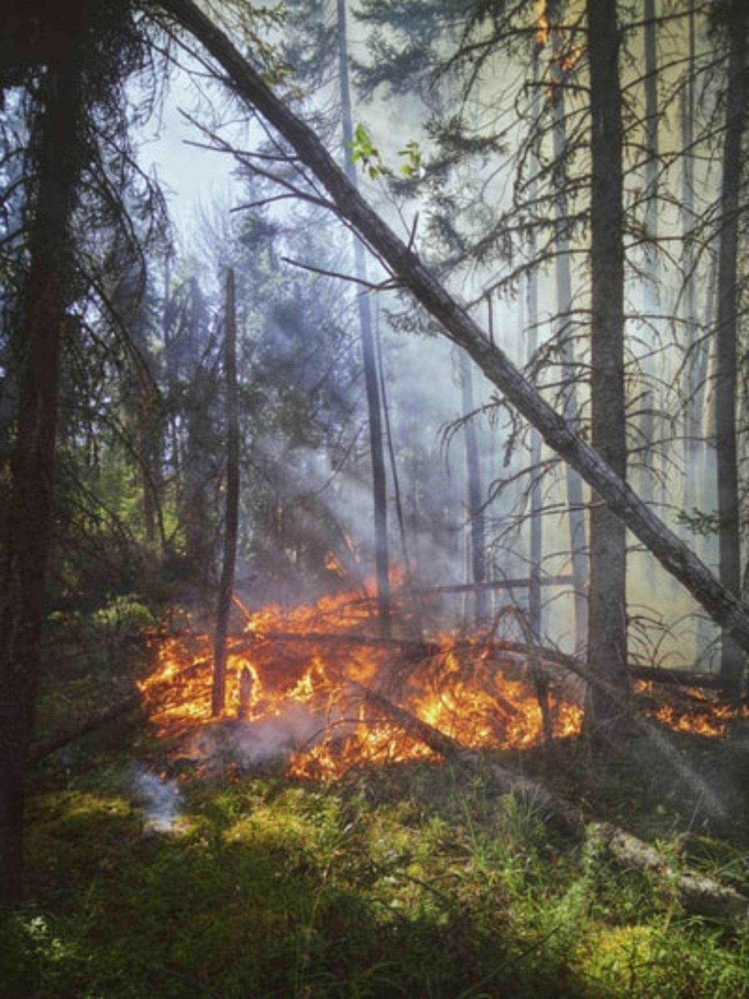 More than 20 Arizona wildfires blaze across the state.